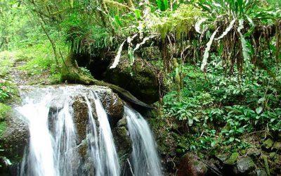 Investir nas florestas é olhar para o futuro